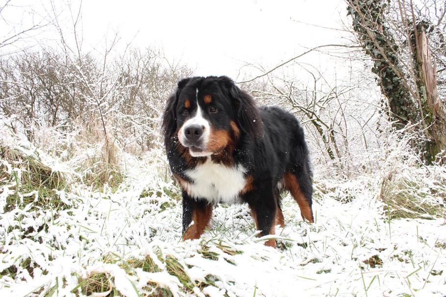 Berlioa-neige-2-ld